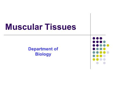 Muscular Tissues Department of Biology. Introduction These tissue form the muscle of the body. Composed of muscle cells or muscle fibers (contraction.