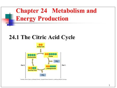 1 24.1The Citric Acid Cycle Chapter 24 Metabolism and Energy Production.