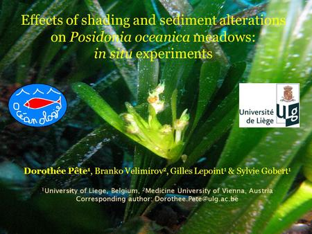 Effects of shading and sediment alterations on Posidonia oceanica meadows: in situ experiments Dorothée Pête 1, Branko Velimirov 2, Gilles Lepoint 1 &