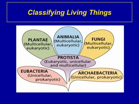 Classifying Living Things. The Six Kingdoms Let us name the six kingdoms: 1. 2. 3. 4. 5. 6. Archaebacteria Eubacteria Protista Fungi Plantae Animalia.