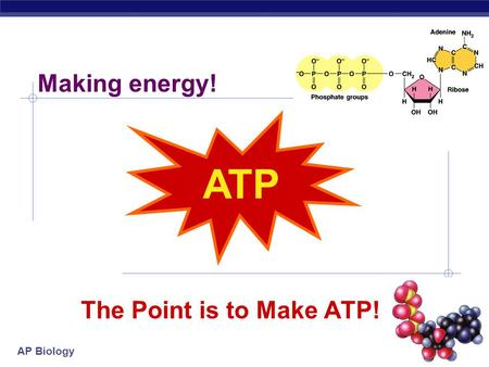Making energy! ATP The Point is to Make ATP! 2005-2006.