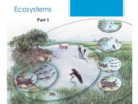 Ecosystems Part 1.