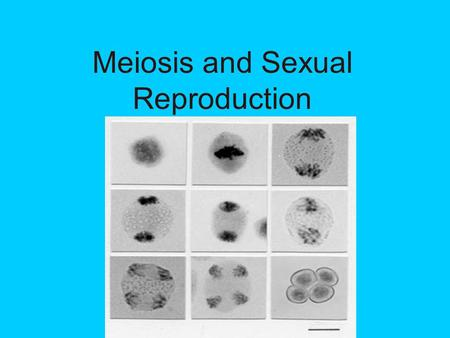 Meiosis and Sexual Reproduction. I. Meiosis Meiosis is a special type of cell division that produces haploid cells. It only occurs in the gametes (sex)