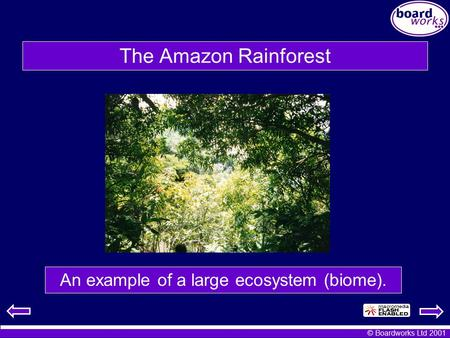 An example of a large ecosystem (biome).