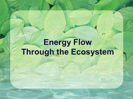 Energy Flow Through the Ecosystem. Energy and matter The Earth has internal (chemical) and external (solar) energy. That energy is used to move matter.