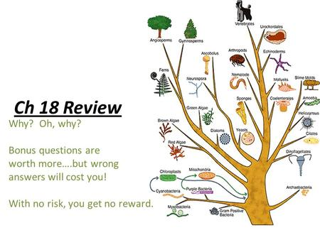 Ch 18 Review Why? Oh, why? Bonus questions are worth more….but wrong answers will cost you! With no risk, you get no reward.