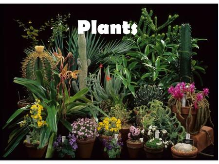 Plants. Let's begin by reviewing the characteristics of Kingdom Plantae: Eukaryotic multicellular Autotrophic Non-mobile Reproduce with seeds and pollen.