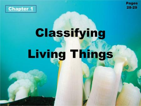 Classifying Living Things Chapter 1 Pages 28-29. Lesson 1 How Are Living Things Classified? Cute.. but SMELLY! Don't bother this mother skunk and her.