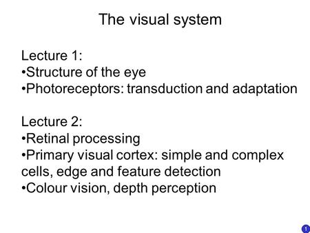 The visual system Lecture 1: Structure of the eye