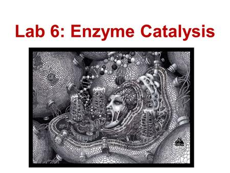 Lab 6: Enzyme Catalysis.