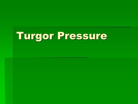 Turgor Pressure. Turgor Pressure-   The pressure exerted by water inside the cell against the cell wall.pressurewater cell wall.