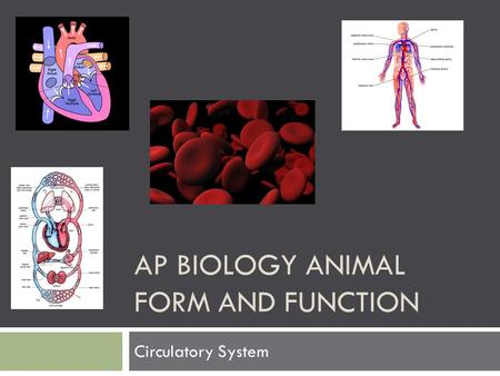 AP BIOLOGY ANIMAL FORM AND FUNCTION Circulatory System.