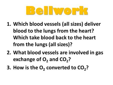 Bellwork Which blood vessels (all sizes) deliver blood to the lungs from the heart? Which take blood back to the heart from the lungs (all sizes)? What.