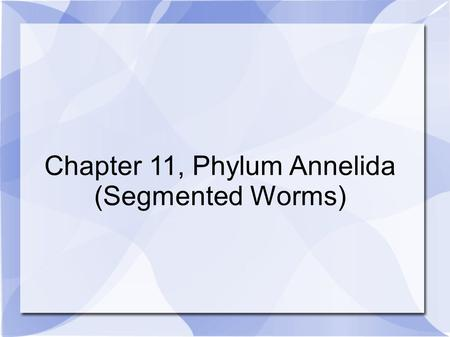 Chapter 11, Phylum Annelida (Segmented Worms). Phylum Annelida.