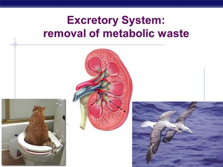 removal of metabolic waste