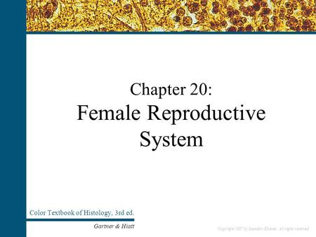 Chapter 20: Female Reproductive System