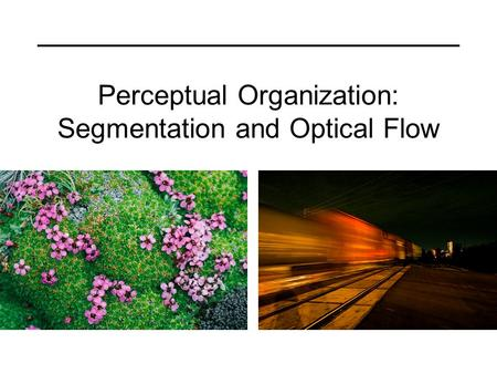 Perceptual Organization: Segmentation and Optical Flow.