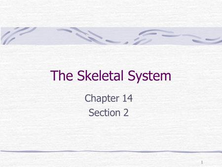 1 The Skeletal System Chapter 14 Section 2. 2 Key Concepts no cares about What are the functions of the skeleton? What role do joints play in the body?