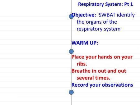 Objective: SWBAT identify the organs of the respiratory system WARM UP: Place your hands on your ribs. Breathe in out and out several times. Record your.