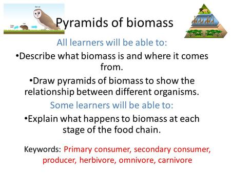 Pyramids of biomass All learners will be able to: Describe what biomass is and where it comes from. Draw pyramids of biomass to show the relationship between.