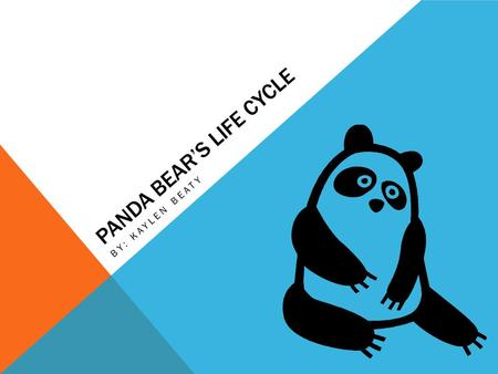 PANDA BEAR'S LIFE CYCLE BY: KAYLEN BEATY. PANDA'S AT BIRTH Baby panda bear's are born pink out of there mother's body. They weigh 3 to 5 ounces and are.