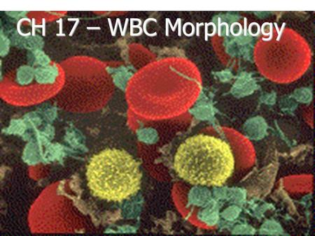 CH 17 – WBC Morphology. Five Types of Leukocytes (WBCs)