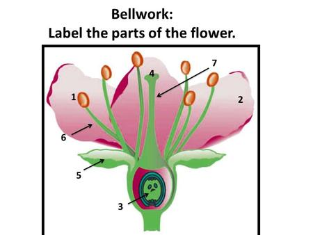 Bellwork: Label the parts of the flower. 1 2 3 4 5 6 7.