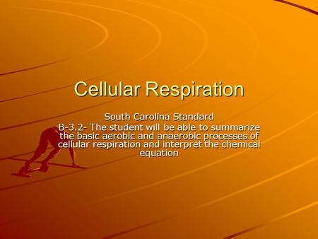 Cellular Respiration South Carolina Standard B-3.2- The student will be able to summarize the basic aerobic and anaerobic processes of cellular respiration.