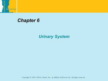 Chapter 6 Urinary System