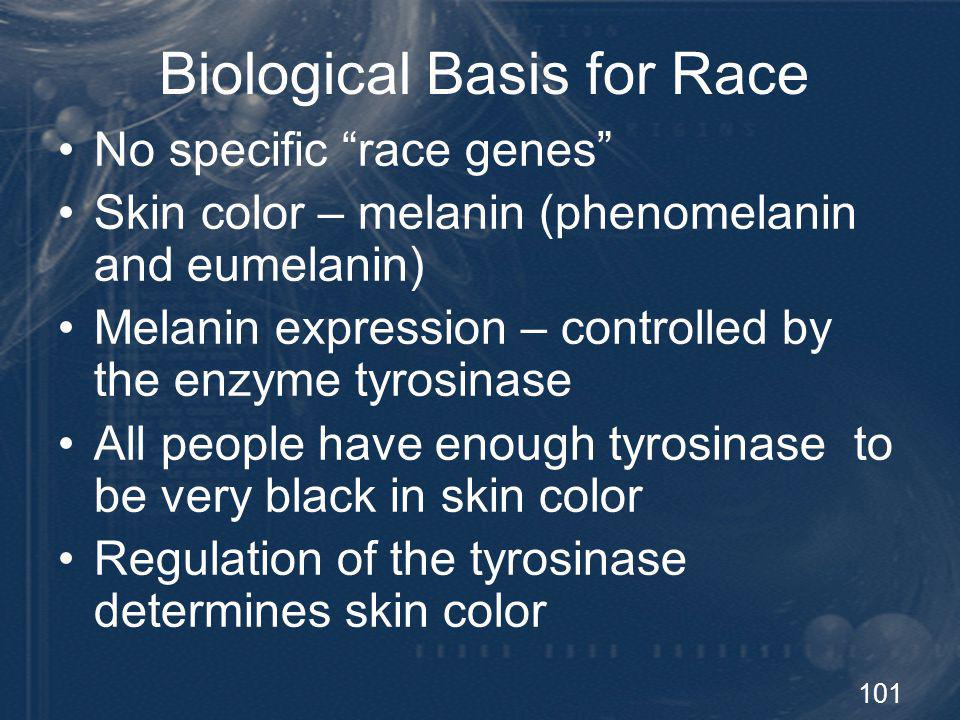 102 Origin of the Races Protein polymorphisms 84% of all variation is found within each racial group 10% of variation is found among racial groups More genetic variation within races than between them