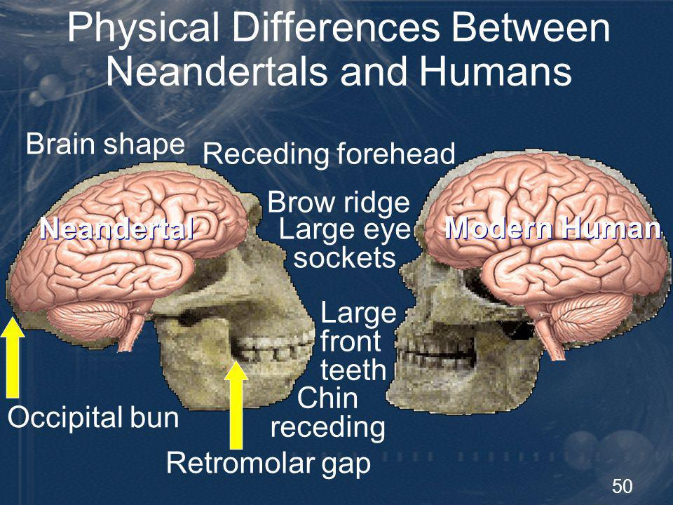 51 Physical Differences Between Neandertals and Humans Elongated foramen magnum Pterygoid tubercle A small rounded nodule on the Pterygoid bone in the roof of the mouth connecting the palatine in front and the quadrate behind.