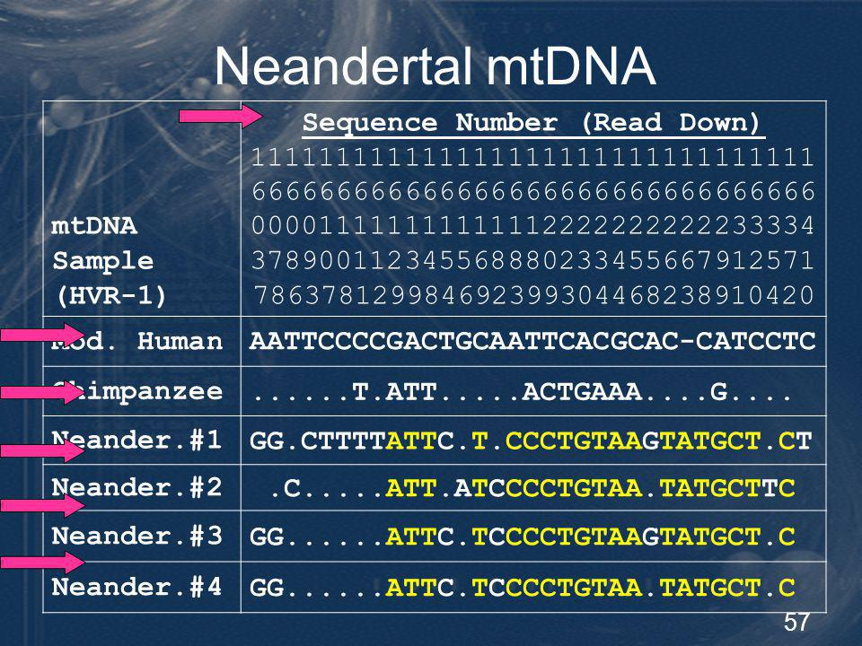 58 Neandertals – Limited Genetic Diversity Population # Individuals mtDNA differences MeanMin.Max.