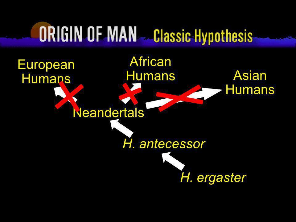 62 Origin of Man Multi-regional Hypothesis H.ergaster Asian Humans .