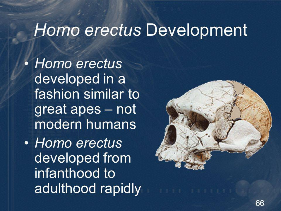 67 Descent of Modern Humans Most of the familiar specimens of Homo erectus and of archaic humans known from the Pleistocene were not members of populations ancestral to us Harpending, H.C., et al.