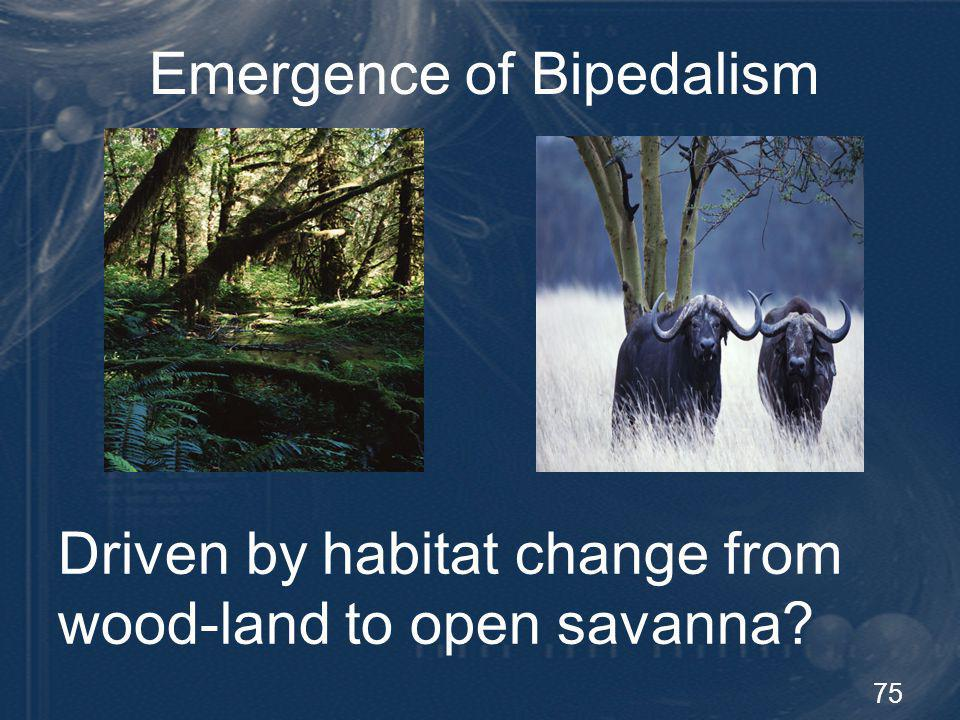 76 Bipedalism Theories TheoryProblems Ecology (Woodland to Savanna) Occurred later 1 Hunting and toolsOccurred later 1 Thermoregulation 2 Occurred later 1 Enhanced visionWrong environment Male provider 3 hominids were reproductively disadvantaged 4 Scarce dietary resources Not fully supported by the data
