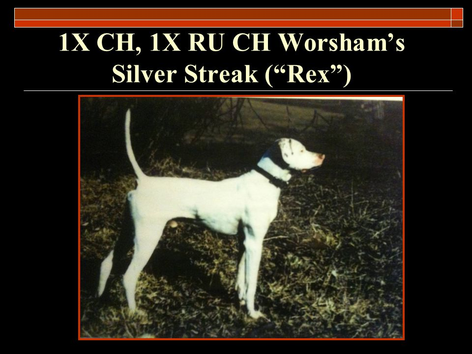 Pointer, Male White and Orange May 11, 1993 – March 18, 2005 TOTAL WINS: 39 Owner: Joe Worsham (of St.