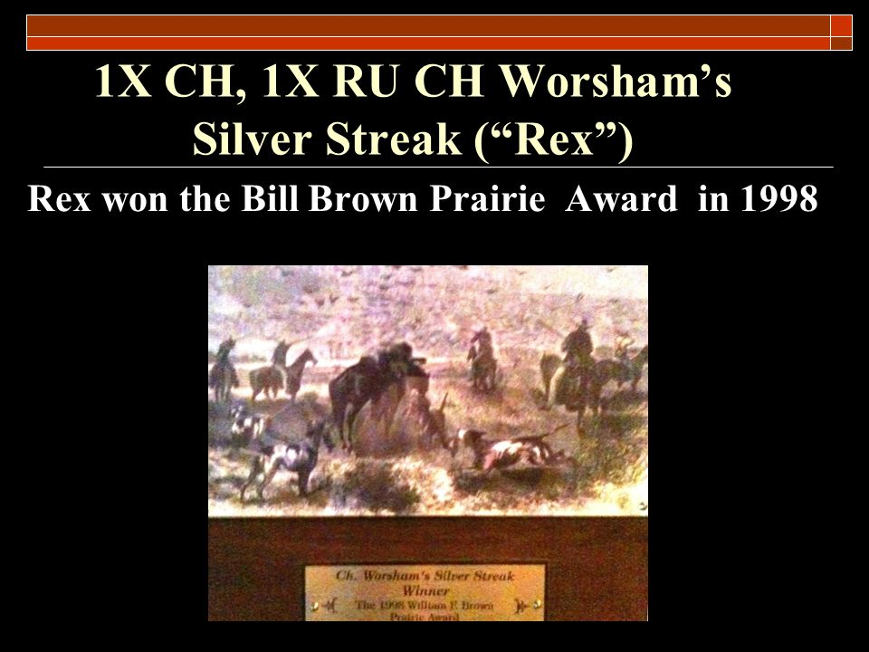 1X CH, 1X RU CH Worshams Silver Streak (Rex) Overall Production Record Rex was sterile and never had offspring