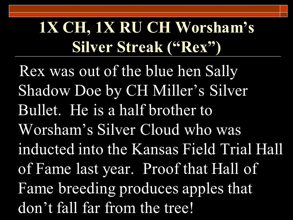 1X CH, 1X RU CH Worshams Silver Streak (Rex) Notable Quotes Joe Worsham He was a true prairie dog…I ran him fearlessly in Open and Amateur competition.