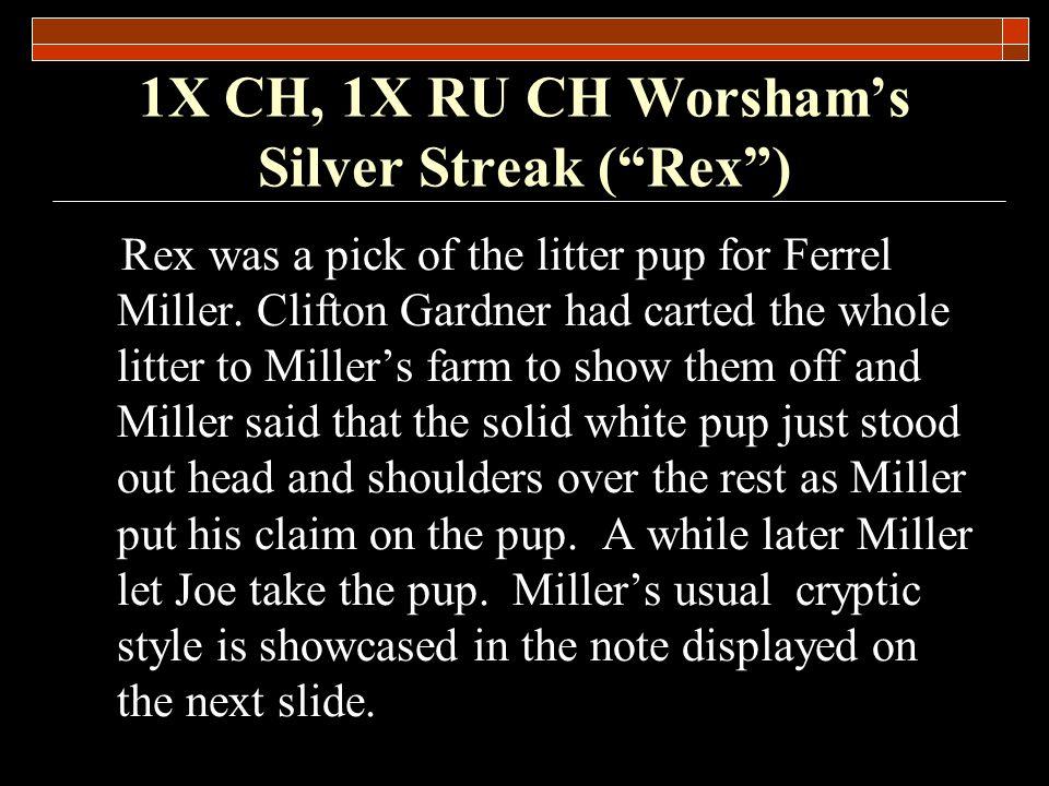 1X CH, 1X RU CH Worshams Silver Streak (Rex)