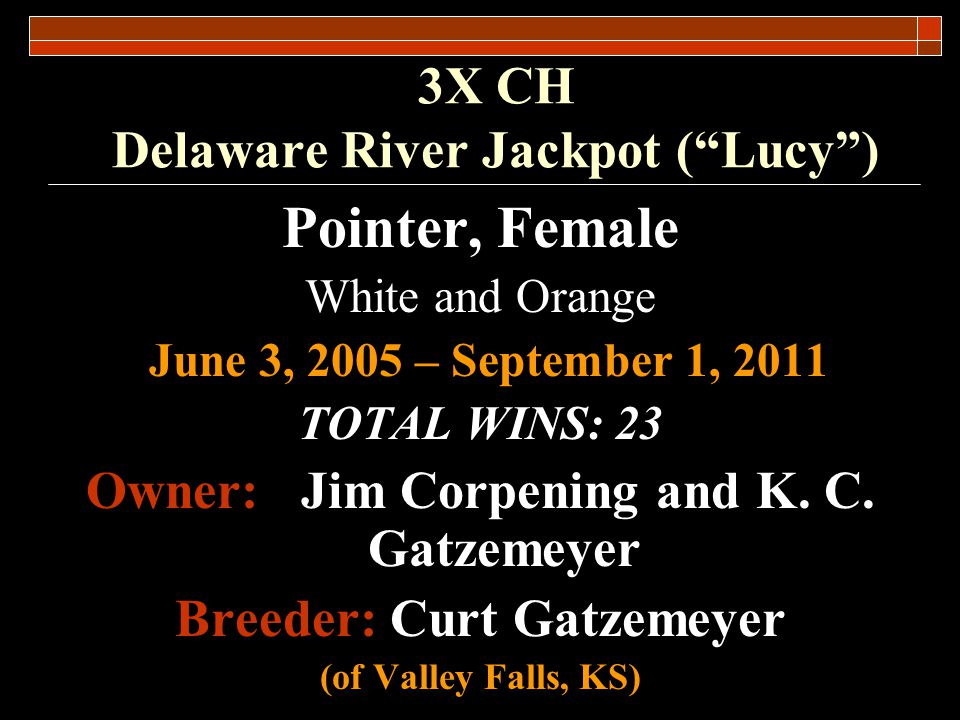 3X CH Delaware River Jackpot (Lucy) Championship Placements National Am.