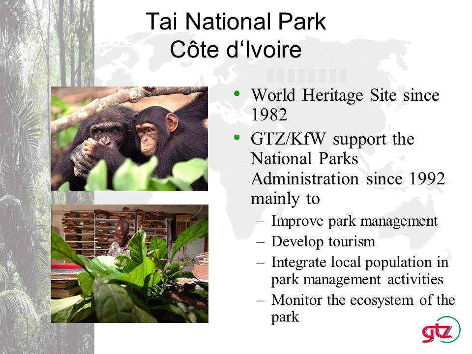 Kahuzi-Biega National Park Democratic Republic of Congo World Heritage Site since 1980 GTZ supports the KBNP since 1985 with –Park infrastructure and management activities –Conflict management during and after the civil war –Habituation of eastern lowland gorillas for tourism –Local development in the buffer zone of the park