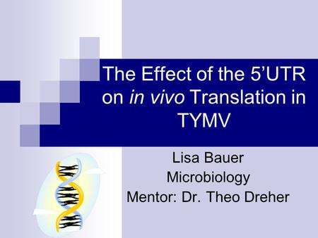 The Effect of the 5'UTR on in vivo Translation in TYMV Lisa Bauer Microbiology Mentor: Dr. Theo Dreher.