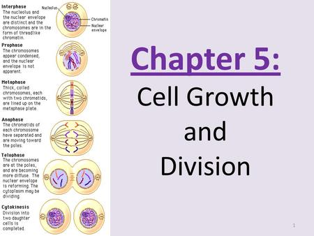 chapter 8 cell growth and division worksheet answers blog archives mrdubuque chapter 10 cell. Black Bedroom Furniture Sets. Home Design Ideas