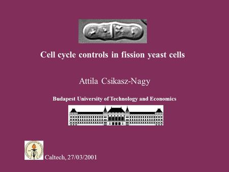 Cell cycle controls in fission yeast cells Attila Csikasz-Nagy Budapest University of Technology and Economics Caltech, 27/03/2001.