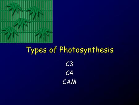 Types of Photosynthesis C3 C4 CAM. Concepts: Photosynthesis Sugar.