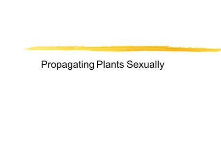Propagating Plants Sexually. Interest Approach zTake a look at the variety of tulips below zWhy is variety of great importance? zHow do you get varieties.