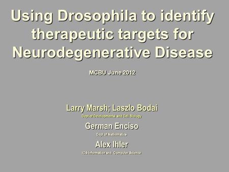 neurodegeneration in drosophila