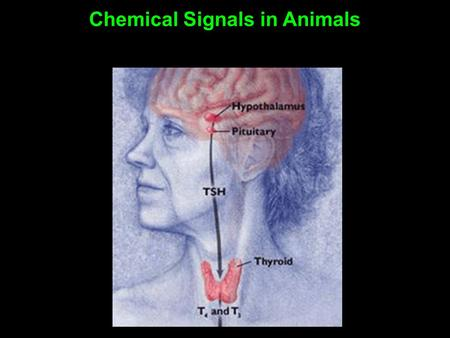Chemical Signals in Animals. A hormone is a chemical secreted into the blood (or other body fluids) that communicates a regulatory message Secreted by.