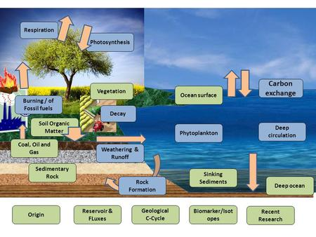 Carbon exchange Photosynthesis Respiration Decay Soil Organic Matter Vegetation Weathering & Runoff Rock Formation Sedimentary Rock Coal, Oil and Gas Phytoplankton.