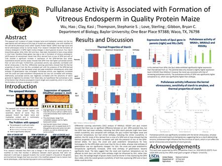 Pullulanase Activity is Associated with Formation of Vitreous Endosperm in Quality Protein Maize Wu, Hao ; Clay, Kasi ; Thompson, Stephanie S. ; Love,